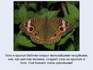 Тело и крылья бабочки покрыт мельчайшими чешуйками, они, как цветная мозаика,