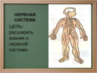 НЕРВНАЯ СИСТЕМА ЦЕЛЬ: расширить знания о нервной системе.