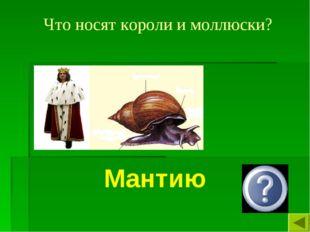 Что носят короли и моллюски? Мантию