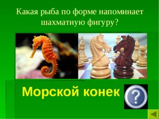Какая рыба по форме напоминает шахматную фигуру? Морской конек