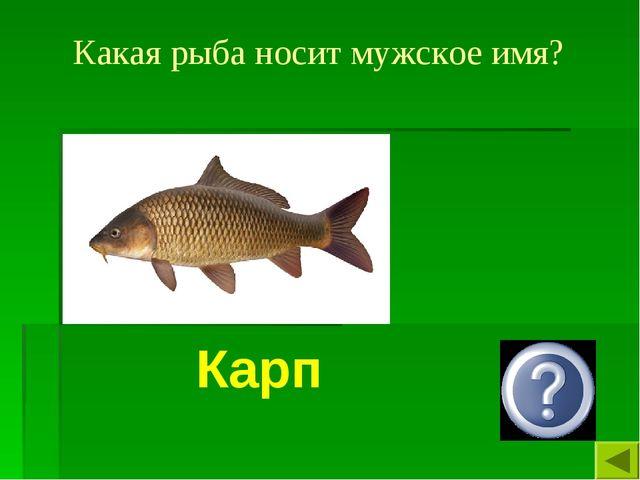 Какая рыба носит мужское имя? Карп