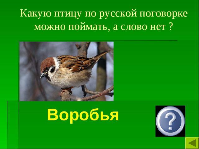 Какую птицу по русской поговорке можно поймать, а слово нет ? Воробья