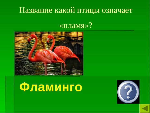 Название какой птицы означает «пламя»? Фламинго