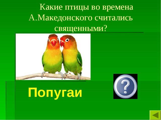 Какие птицы во времена А.Македонского считались священными? Попугаи