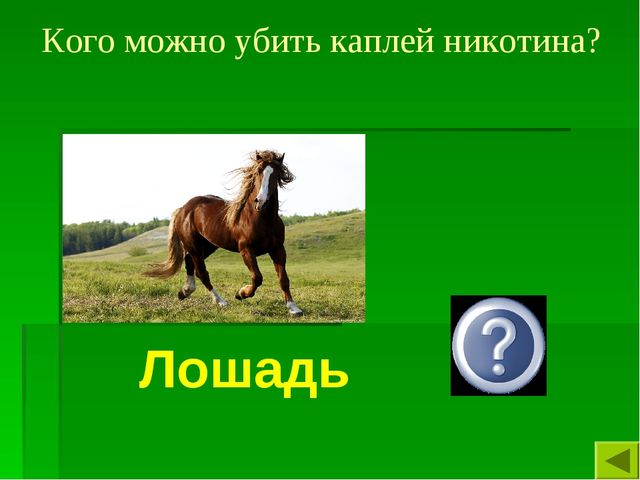 Кого можно убить каплей никотина? Лошадь