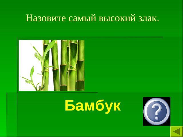 Назовите самый высокий злак. Бамбук