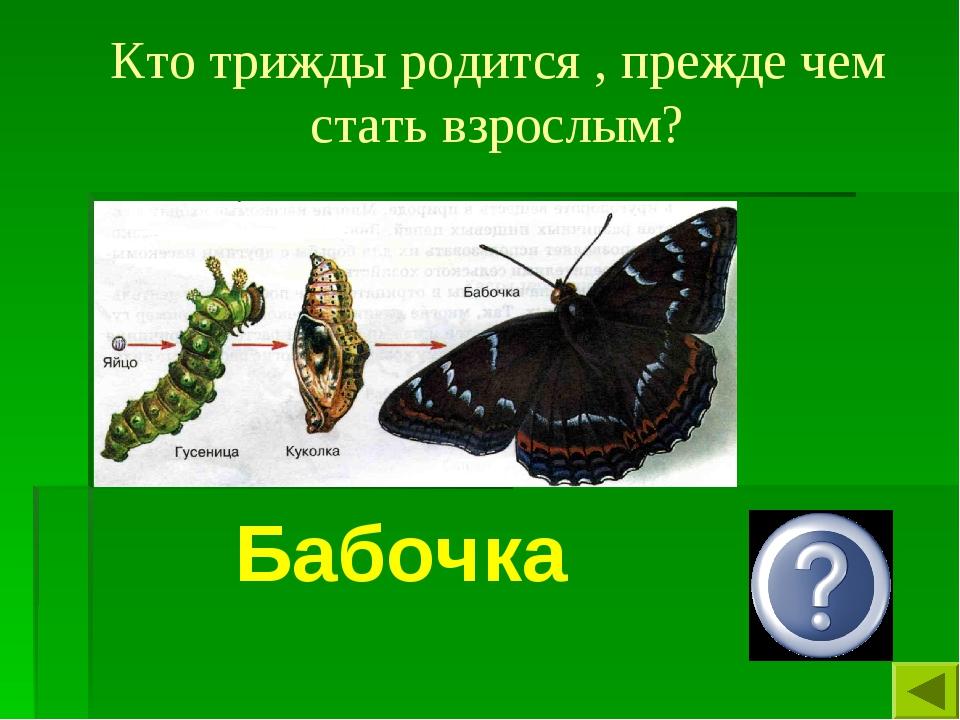 Кто трижды родится , прежде чем стать взрослым? Бабочка