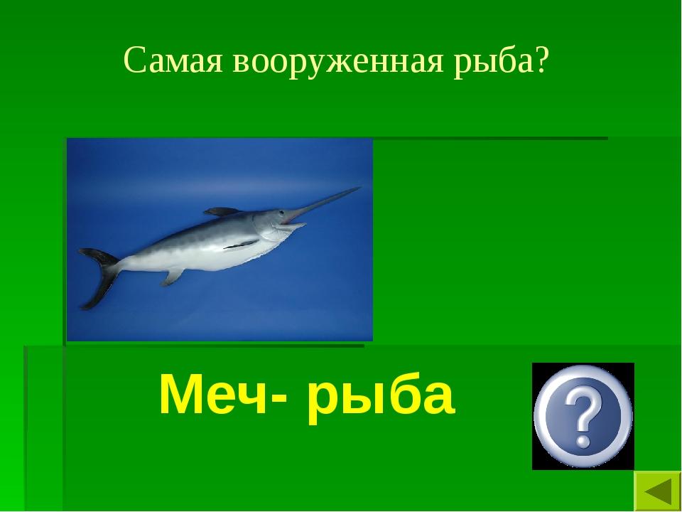 Самая вооруженная рыба? Меч- рыба