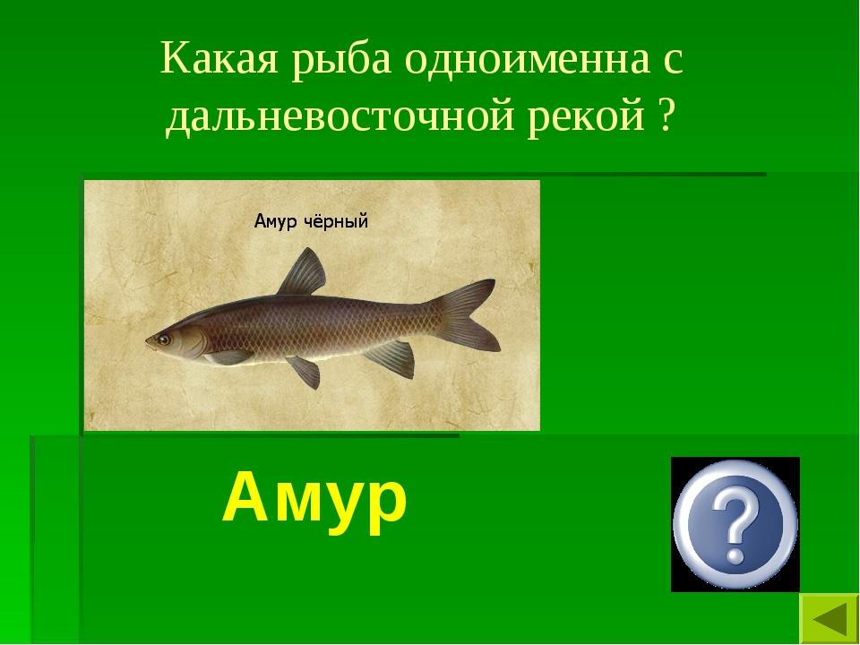 Какая рыба одноименна с дальневосточной рекой ? Амур