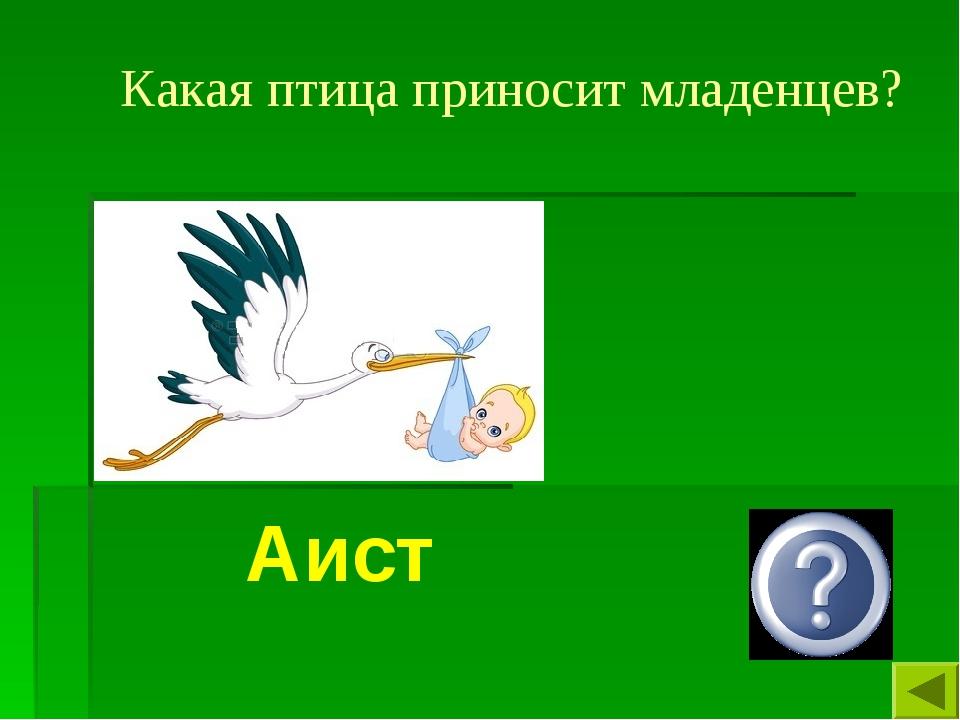 Какая птица приносит младенцев? Аист