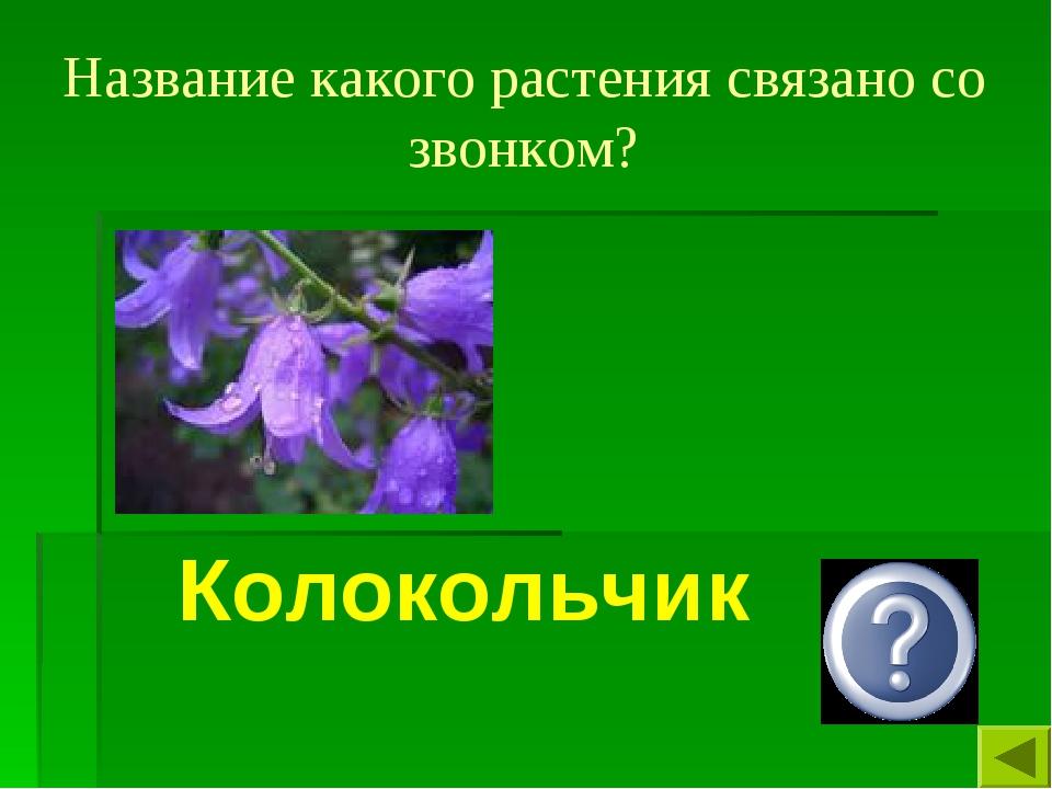 Название какого растения связано со звонком? Колокольчик