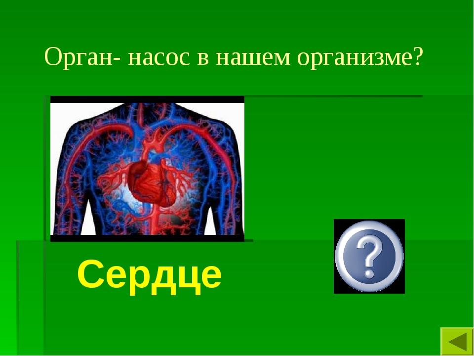 Орган- насос в нашем организме? Сердце