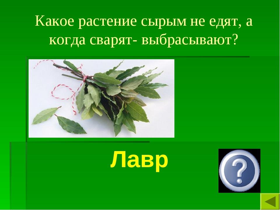 Какое растение сырым не едят, а когда сварят- выбрасывают? Лавр