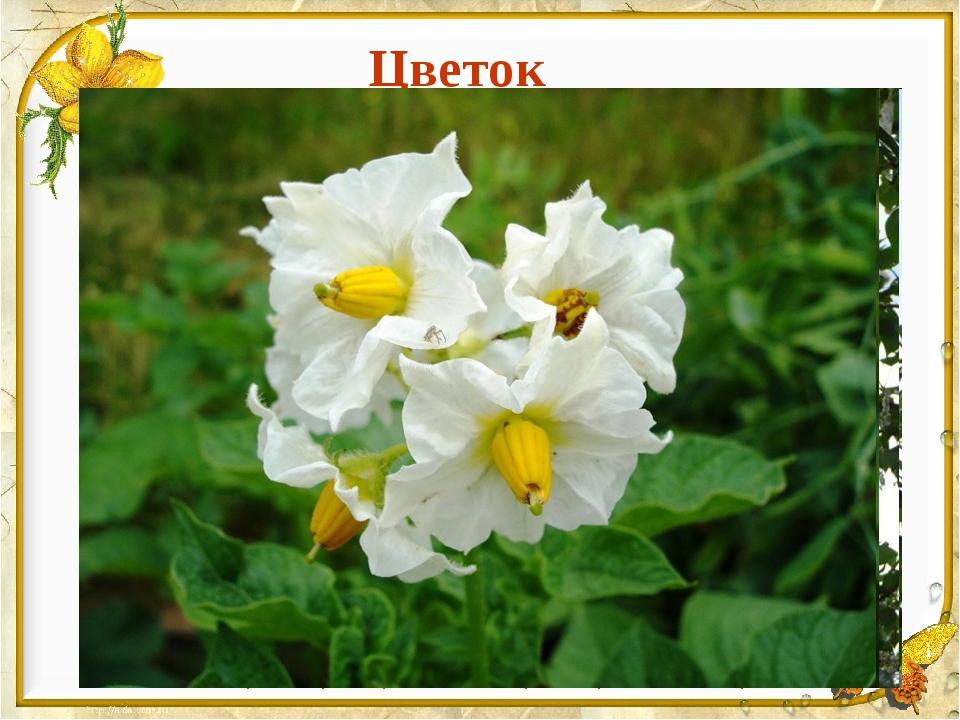Цветок Стрелитция королевская, Цветок райской птицы.