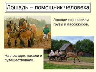Лошадь – помощник человека На лошадях пахали и путешествовали. Лошади перево