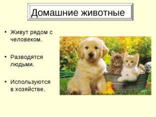 Домашние животные Живут рядом с человеком. Разводятся людьми. Используются в