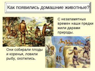 Как появились домашние животные? Они собирали плоды и коренья, ловили рыбу,