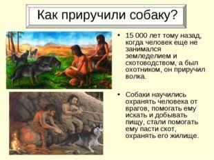 Как приручили собаку? 15000 лет тому назад, когда человек еще не занимался з