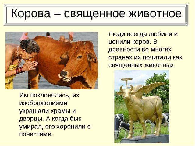 Корова – священное животное Им поклонялись, их изображениями украшали храмы...