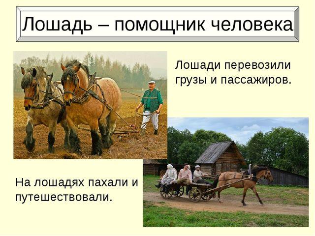 Лошадь – помощник человека На лошадях пахали и путешествовали. Лошади перево...