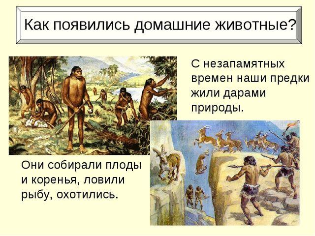 Как появились домашние животные? Они собирали плоды и коренья, ловили рыбу,...