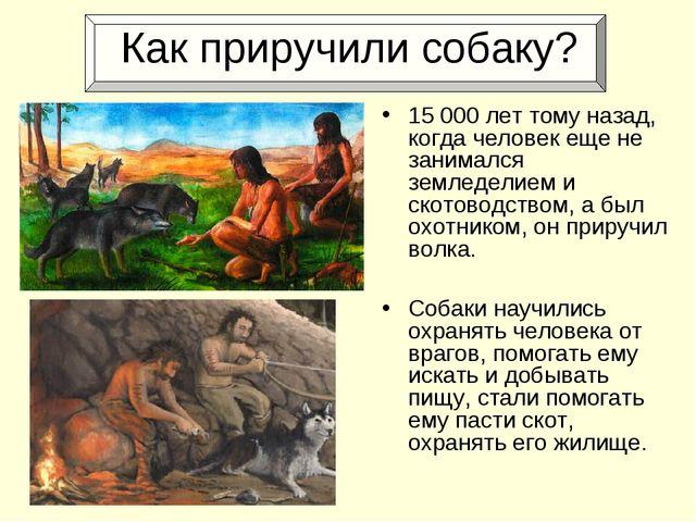 Как приручили собаку? 15000 лет тому назад, когда человек еще не занимался з...