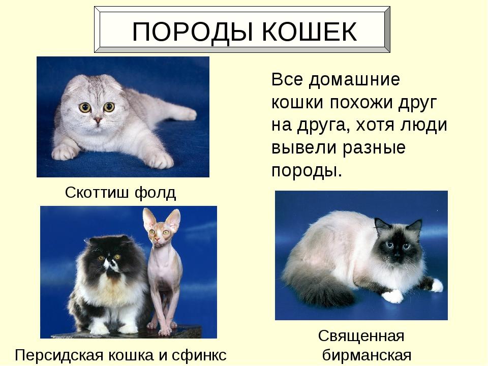 ПОРОДЫ КОШЕК Все домашние кошки похожи друг на друга, хотя люди вывели разны...