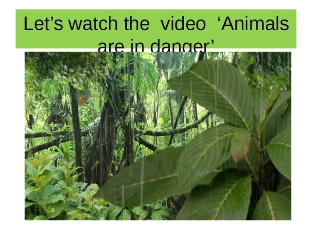 Let's watch the video 'Animals are in danger'