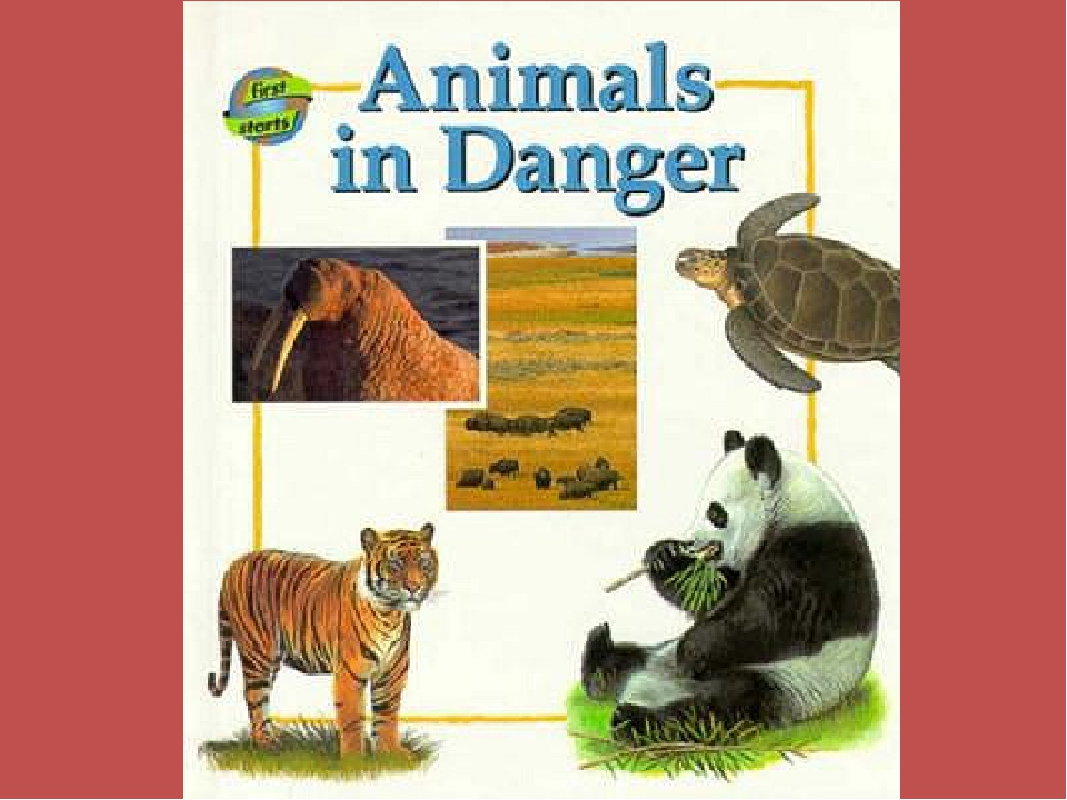 animals in danger Animals in danger pop-up book [william mccay, keith moseley] on amazoncom free shipping on qualifying offers describes eight endangered species, including the tiger, orangutan, estuarine crocodile, australian ghost bat.