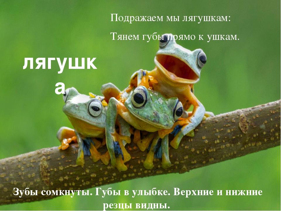 лягушка Зубы сомкнуты. Губы в улыбке. Верхние и нижние резцы видны. Подража...