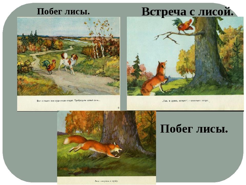 Побег лисы. Встреча с лисой. Побег лисы.