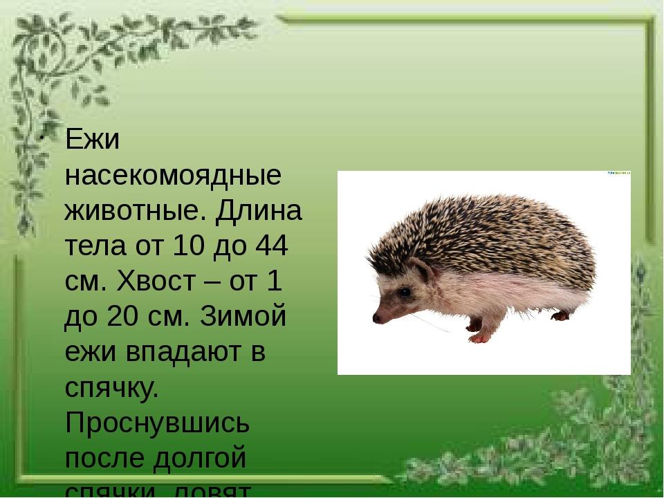 Ежи насекомоядные животные. Длина тела от 10 до 44 см. Хвост – от 1 до 20 см...