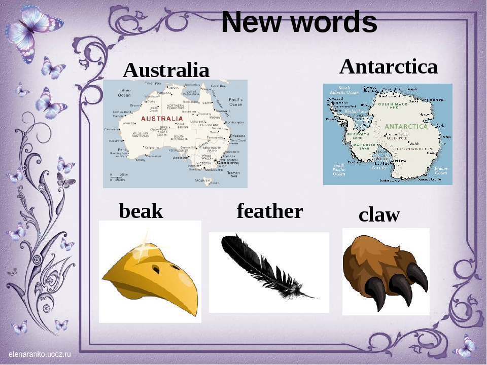 New words Australia Antarctica feather claw beak