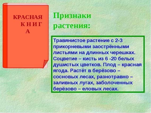 Признаки растения: Травянистое растение с 2-3 прикорневыми заострёнными листь...