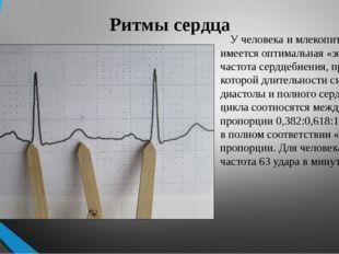 Ритмы сердца У человека и млекопитающих имеется оптимальная «золотая» частота