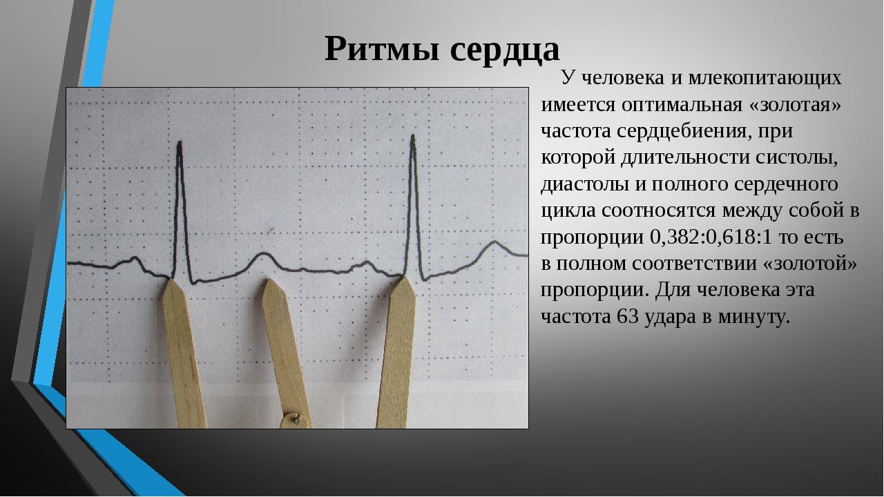 Ритмы сердца У человека и млекопитающих имеется оптимальная «золотая» частота...