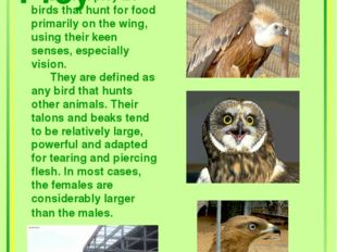 Birds of Prey Birds of prey are birds that hunt for food primarily on the wi