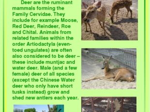 Deer Deer are the ruminant mammals forming the Family Cervidae. They include