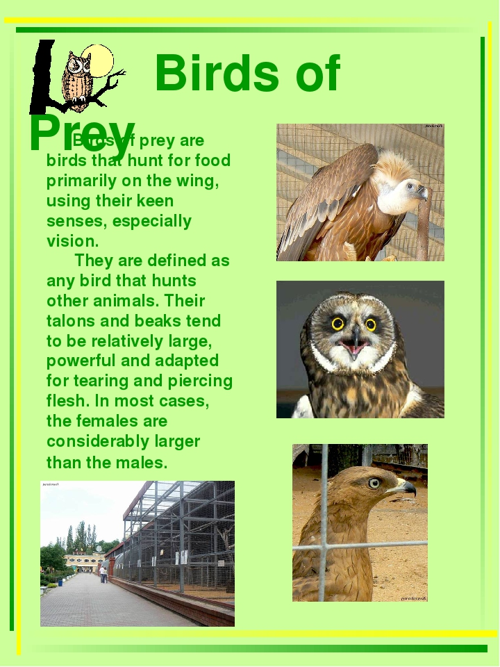 Birds of Prey Birds of prey are birds that hunt for food primarily on the wi...