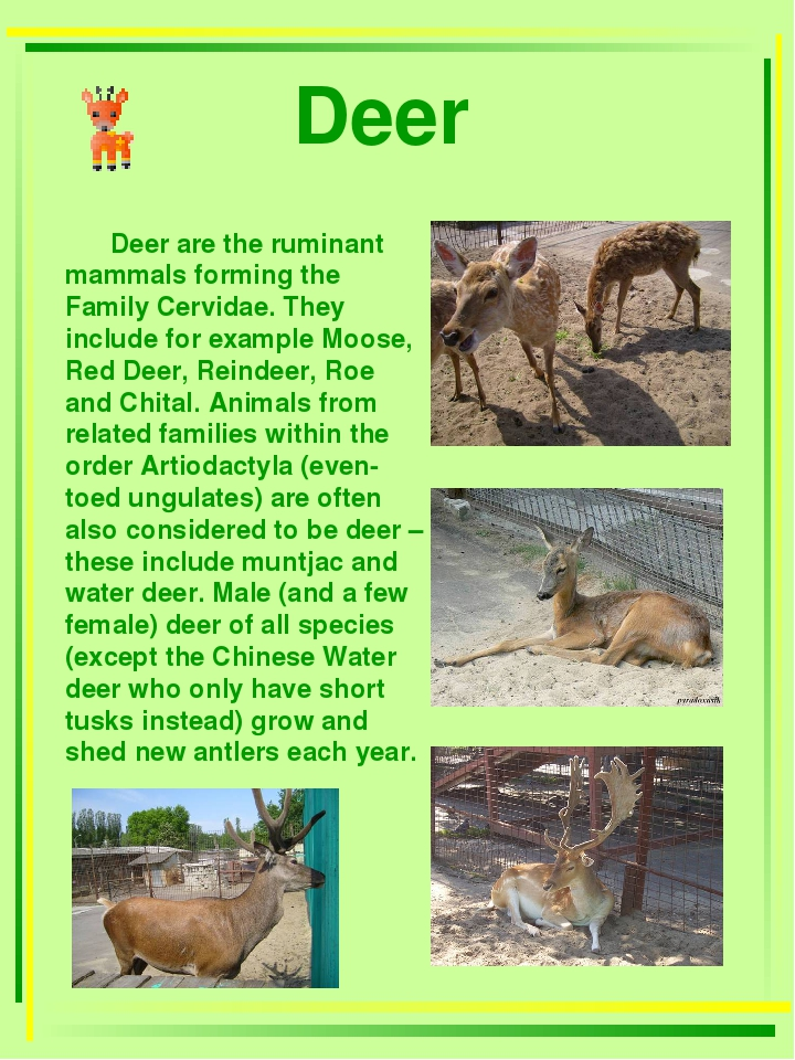 Deer Deer are the ruminant mammals forming the Family Cervidae. They include...