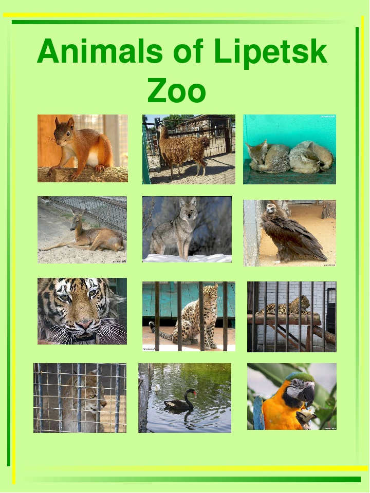 Animals of Lipetsk Zoo