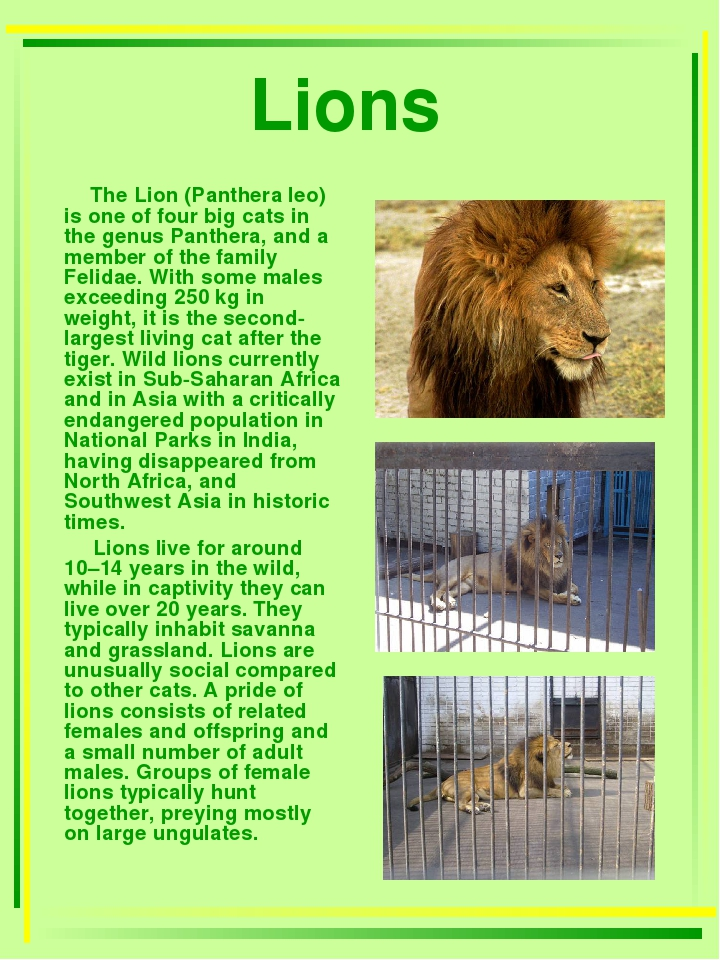 Lions The Lion (Panthera leo) is one of four big cats in the genus Panthera,...