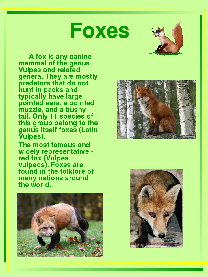 Foxes A fox is any canine mammal of the genus Vulpes and related genera. They...