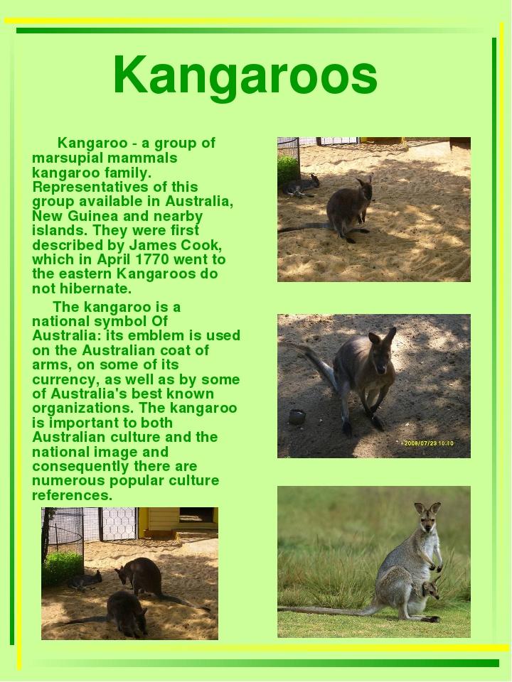 Kangaroos Kangaroo - a group of marsupial mammals kangaroo family. Representa...
