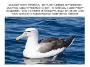 Замыкают список альбатросы - шесть из семи видов австралийского альбатроса на