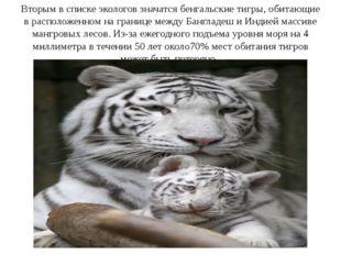 Вторым в списке экологов значатся бенгальские тигры, обитающие в расположенно