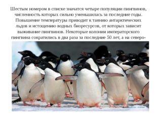 Шестым номером в списке значатся четыре популяции пингвинов, численность кото