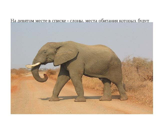 На девятом месте в списке - слоны, места обитания которых будут также сокращ...