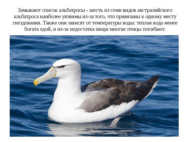 Замыкают список альбатросы - шесть из семи видов австралийского альбатроса на...