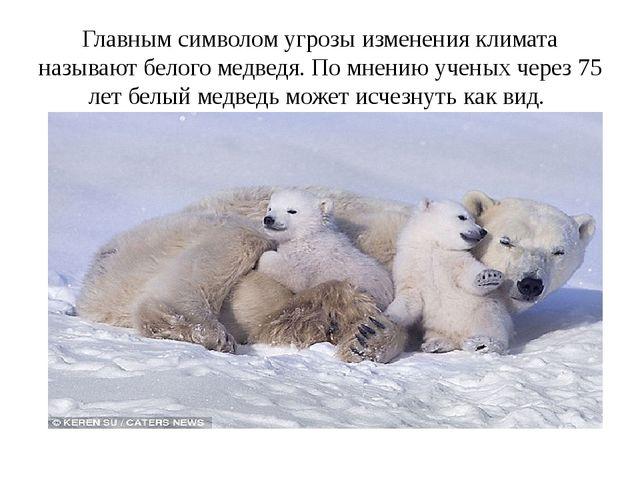Главным символом угрозы изменения климата называют белого медведя. По мнению...